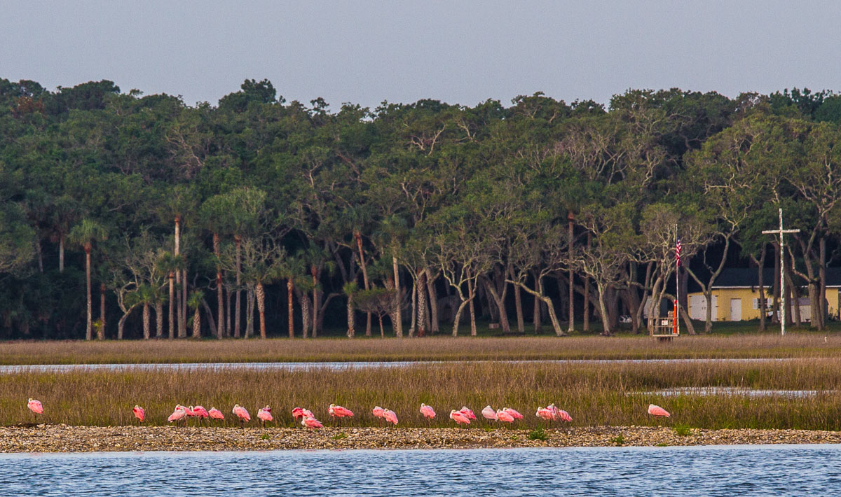 Flamingos_MG_7492-1