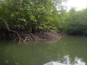 FirstMangroveElEncanto