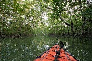 Ron explores Rio Sucio tributaries aboard KT, our kayak